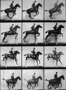 Serie foto cavallo salta